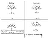 4 Seasons of Apple Trees