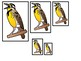 4 Wyoming State Symbols themed Size Sequence Preschool Learning Games.