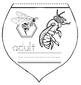 """Life Cycle Of A Honey Bee: """"Bottoms Up!""""  a Flip the Flap Booklet Craft"""
