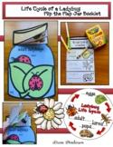 40% Off Life Cycle of a Ladybug Craft