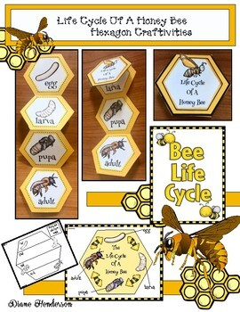 Life Cycle Of A Honey Bee Hexagon Craft & Activities