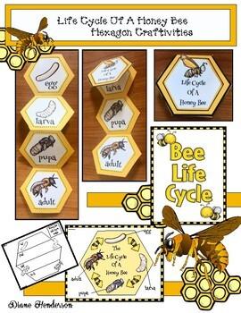 Life Cycle Of A Honey Bee Hexagon Craft & Activities