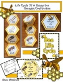 Bee Activities: Life Cycle Of A Honey Bee Hexagon Craft &