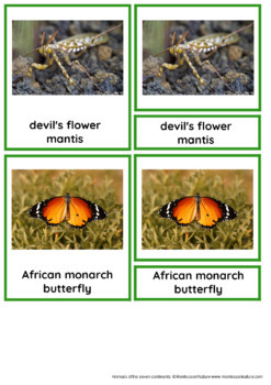 45 Animals Of Africa - Nomenclature and Information Cards