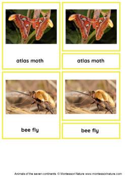 45 Animals Of Asia – Montessori Nomenclature And Information Cards
