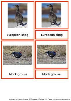 45 Animals Of Europe – Montessori Nomenclature And Information Cards
