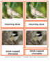 45 Animals Of North America – Montessori Nomenclature And Information Cards