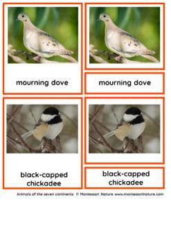 45 Animals Of North America – Montessori Nomenclature And Information Cards