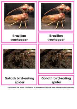 45 Animals Of South America – Montessori Nomenclature And Information Cards