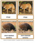 Animals of the Seven Continents - Montessori Nomenclature and Information Cards
