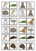 Australian Animal Theme Fun Domino Game In Color For the J