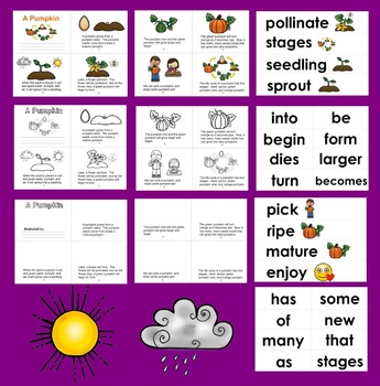 Pumpkins Life Cycle Readers - 3 Levels + Illustrated Word Wall