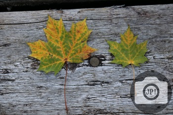 48 - TEXTURES - wood and leaves [By Just Photos!]