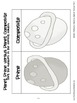 4.OA.4 Fourth Grade Common Core Worksheets, Activity, and Poster