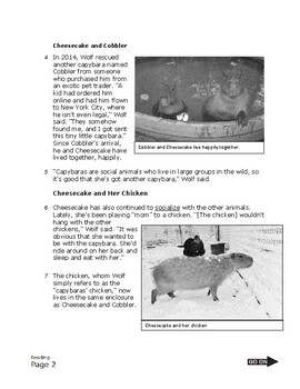 4th Fourth Grade STAAR Non-Fiction Reading Passage with Questions