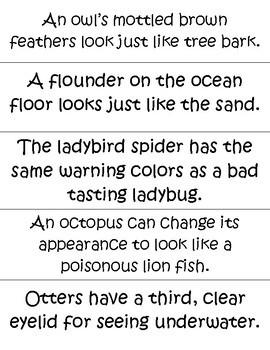 Grade Animal Adaptations Lesson - Physical Adaptations Pocket ...