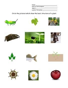 4th Grade New York Alternative Assessment Science AGLI 2 - Plant Parts