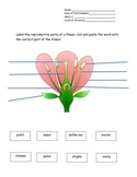 4th Grade New York Alternative Assessment Science AGLI 2 - Plant Reproduction