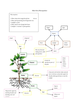 4th Grade Plants Concept Map