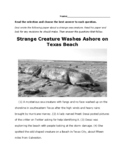 What Is that Creature? 4th Grade STAAR Writing Revising & Editing Passage