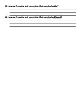 4th Grade Science Metamorphosis Test and Study Guide