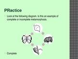 4th Grade TCAP Practice Metamorphosis