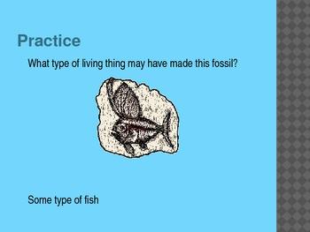 4th Grade TCAP Practice Survival of Species