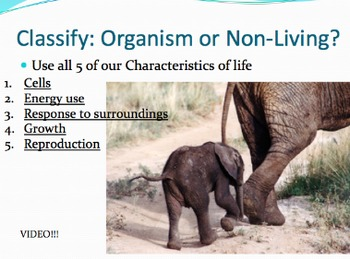 5 Characteristics of Living Things/Organisms - Lesson Presentation, Video