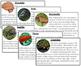 Vertebrates (5 Classes): Information Cards