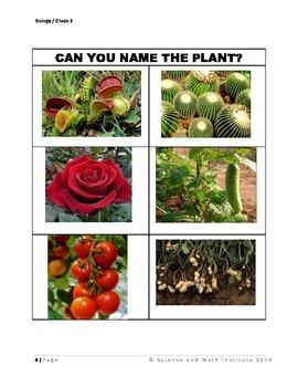 5 E' Lesson - Parts of a Plant