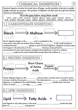 the absorption of light by photosynthetic pigments worksheet ...
