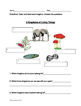5 kingdoms of life worksheet by marylou breedlove tpt. Black Bedroom Furniture Sets. Home Design Ideas