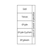 5 Levels of Cellular Organization Foldable