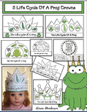 """5 """"Life Cycle Of A Frog"""" Crowns"""