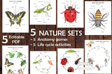 5 NATURE SETS, Insects study, anatomy and life cycle print