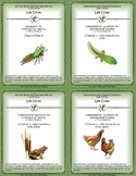 5 NGRE Life Cycles - Complete Set, 1-4