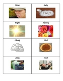 Senses Sort Cards: Sensory Adjectives
