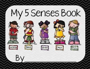 5 Senses Book MEGA Bundle