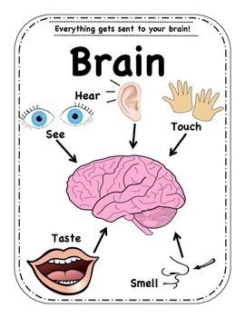 5 Senses Fun!