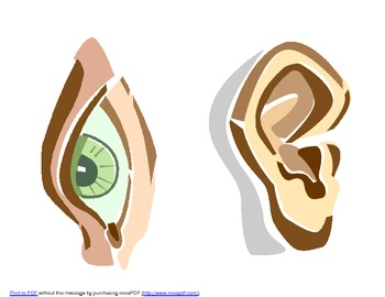 5 Senses Images for Posters