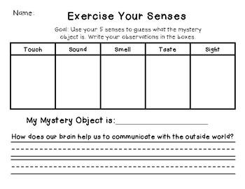 5 Senses Mystery Object Activity