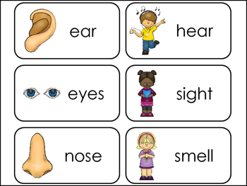 5 Senses Picture Word Flash Cards 2028164 on Educational Printables
