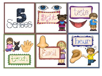 5 Senses Poster and Individual Cards