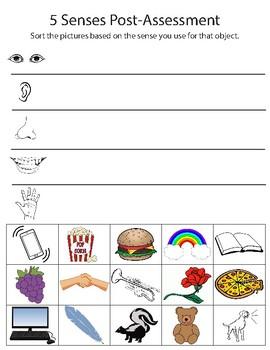 5 Senses Pre/Post Assessment