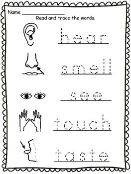 5 Senses Vocabulary Sheets