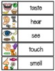 5 Senses Word Cards!