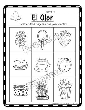 5 Sentidos, 5 Senses Unit in Spanish, No prep, Literacy printables, craft, games