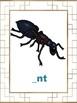 Phonemic Awareness Alphabet Cards: 5 Activities in 1