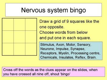 5 resources for teaching the nervous system