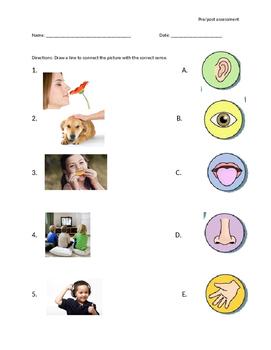 5 senses matching